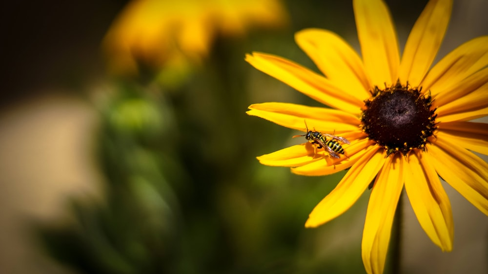 yellow flower with black and white bee