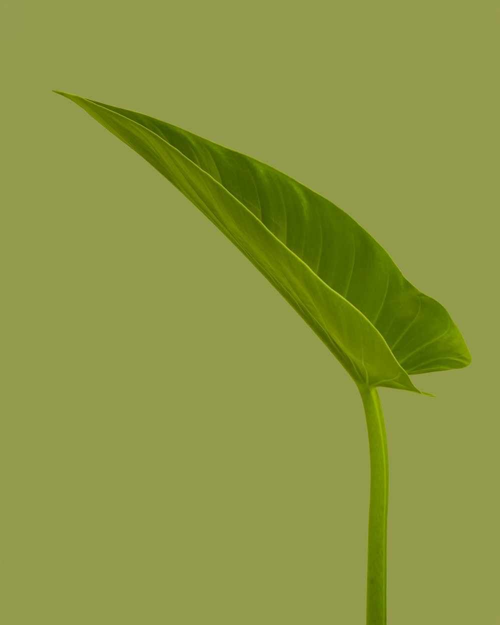 green leaf with green background