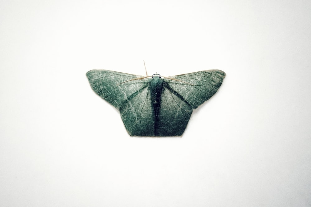 black and green butterfly on white surface
