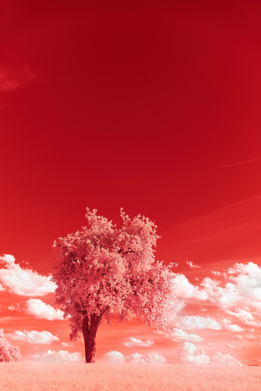 tree under blue sky during daytime