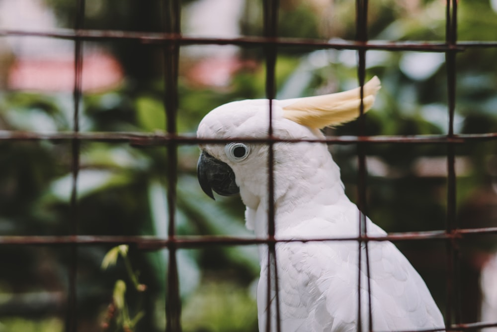 white and yellow bird in cage