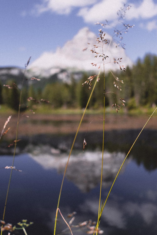 green grass near lake during daytime