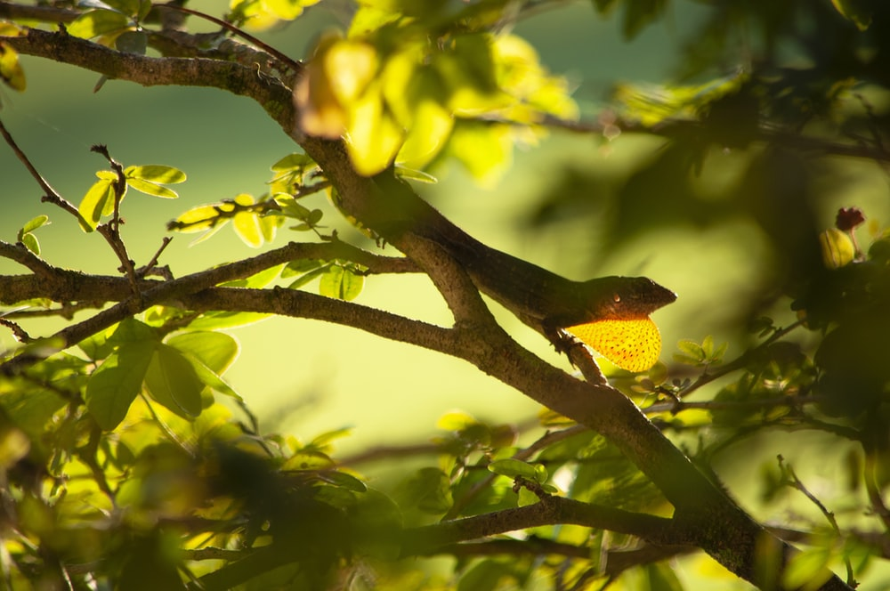yellow and green bird on tree branch during daytime