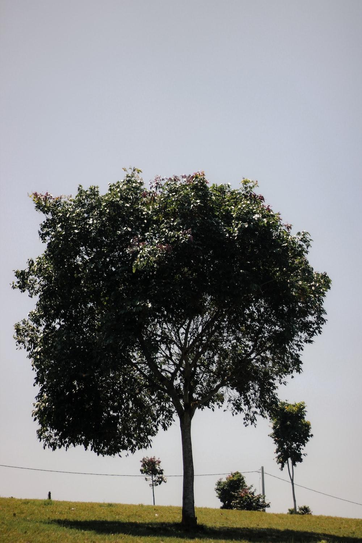 green tree under gray sky