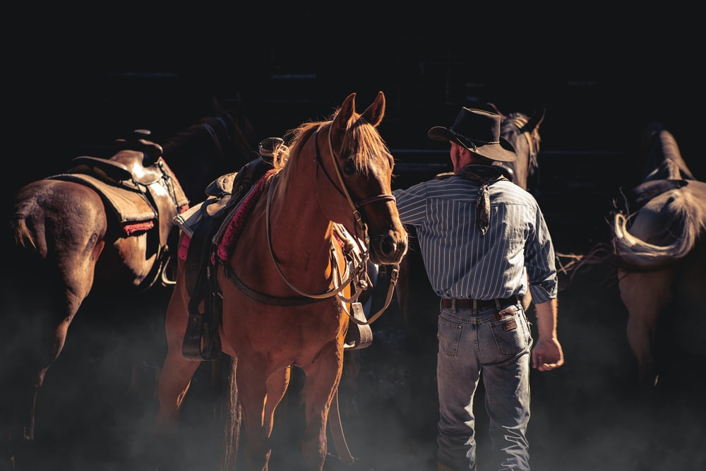 man in blue and white striped dress shirt and blue denim jeans standing beside brown horse