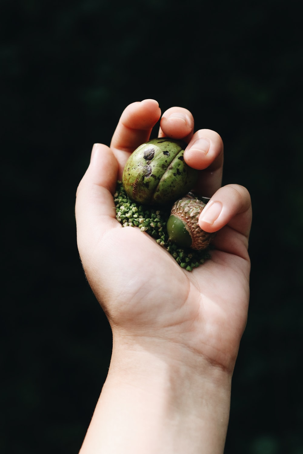 person holding green and white frog