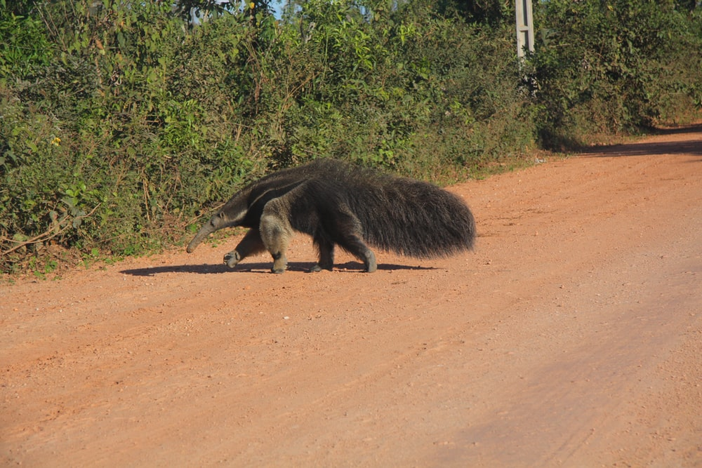 black animal on brown dirt