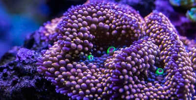 purple and blue flower in close up photography reef zoom background
