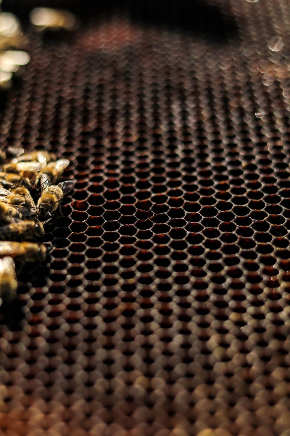 brown and black bee on brown and black textile