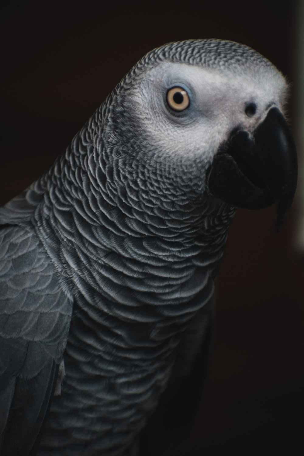 gray and black bird in close up photography