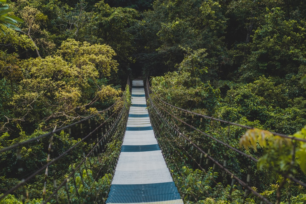 blue and white bridge in the middle of green trees
