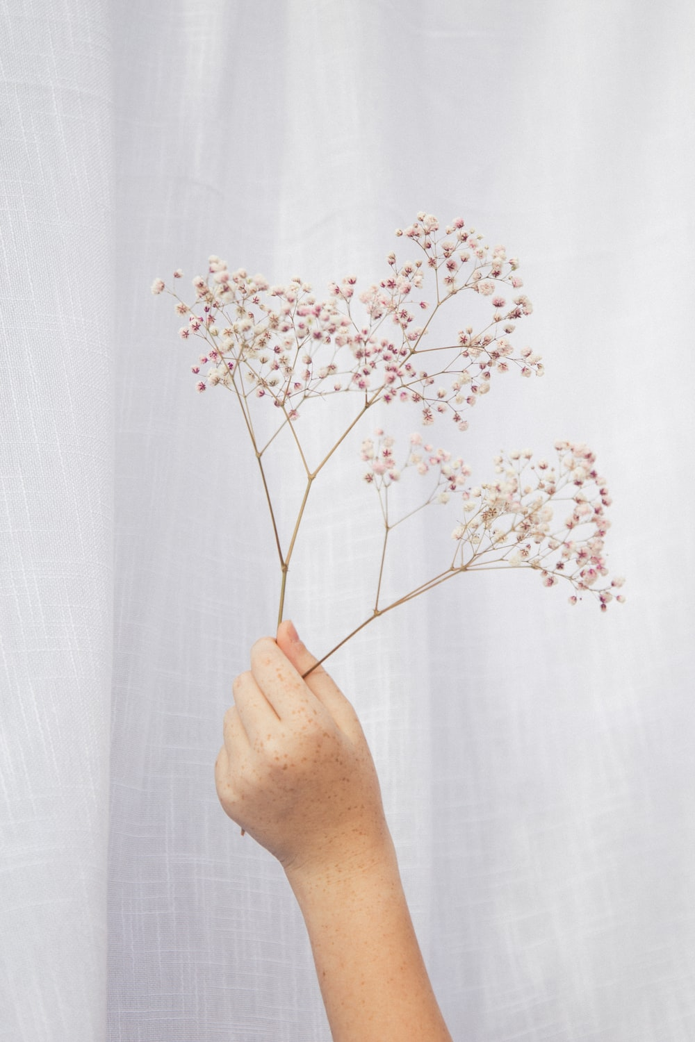 person holding white flower in front of white curtain