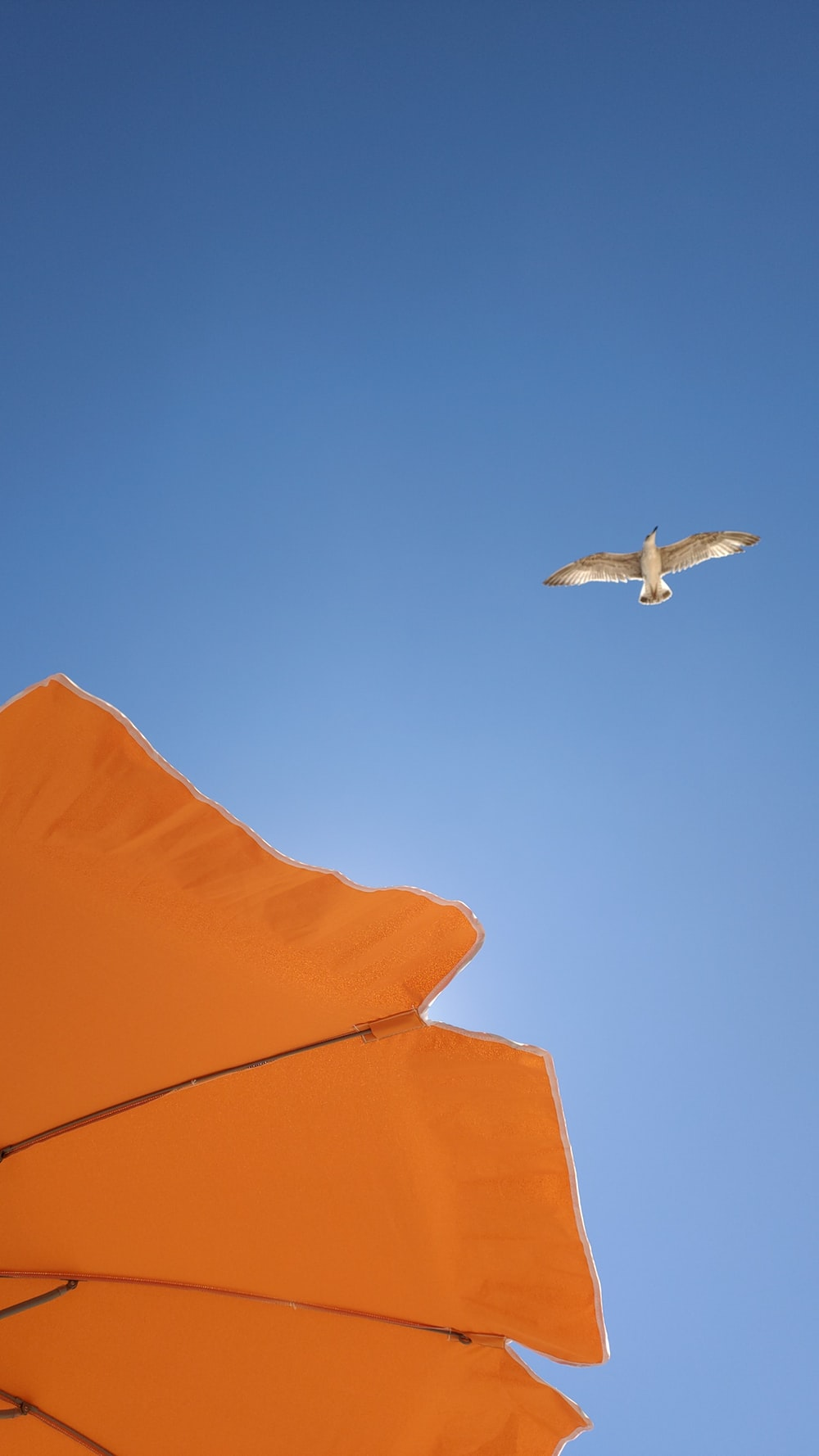 white bird flying over orange textile