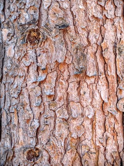 tree trunk bark texture