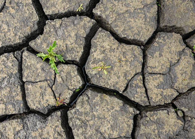 green plant on gray concrete blocks