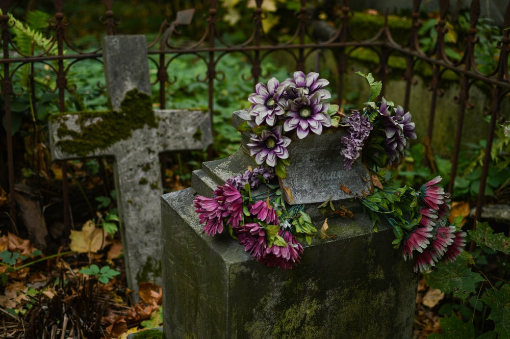 purple flowers on gray concrete pot