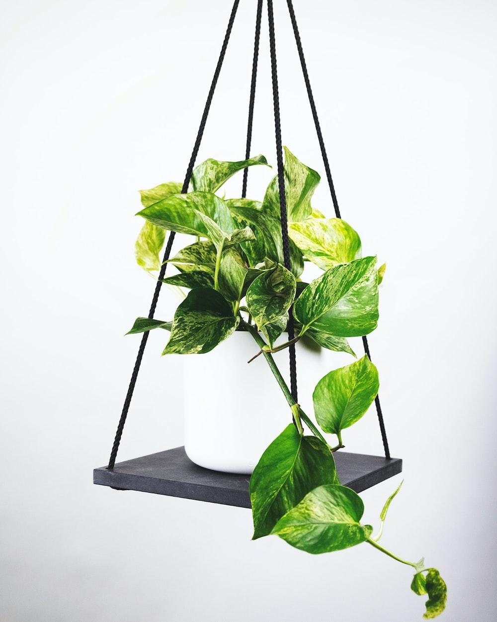 green plant on white pot