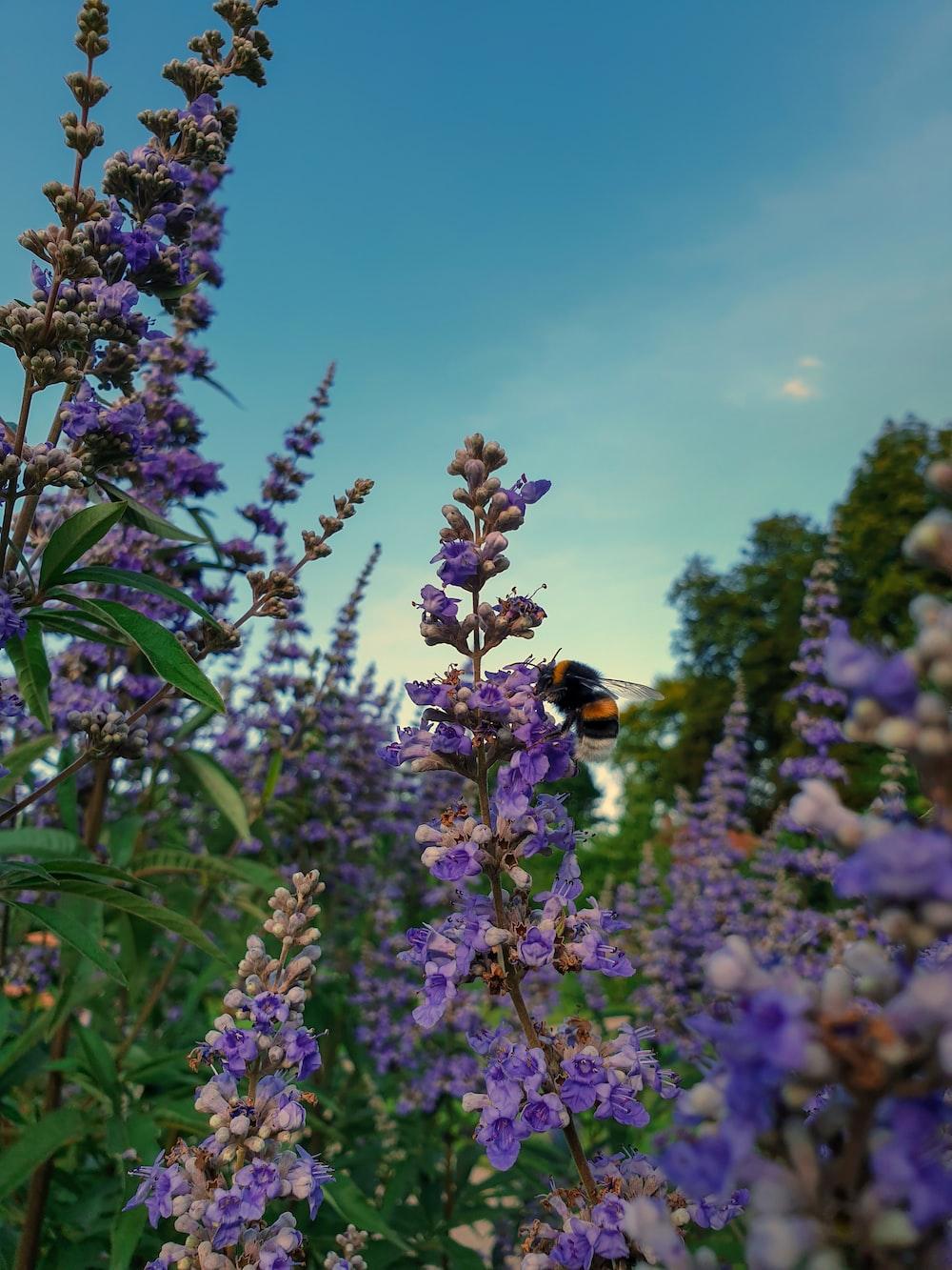 purple flower under blue sky during daytime