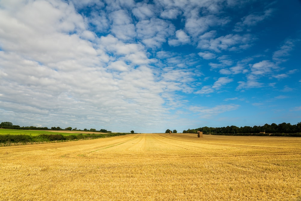 brown field under blue sky and white clouds during daytime