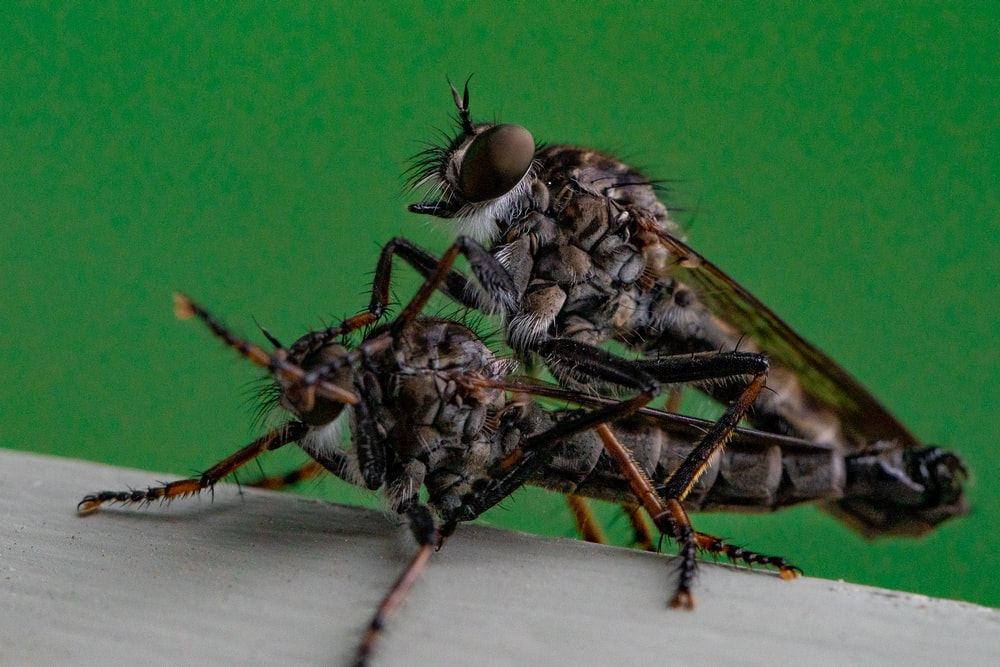 green and black fly on white textile