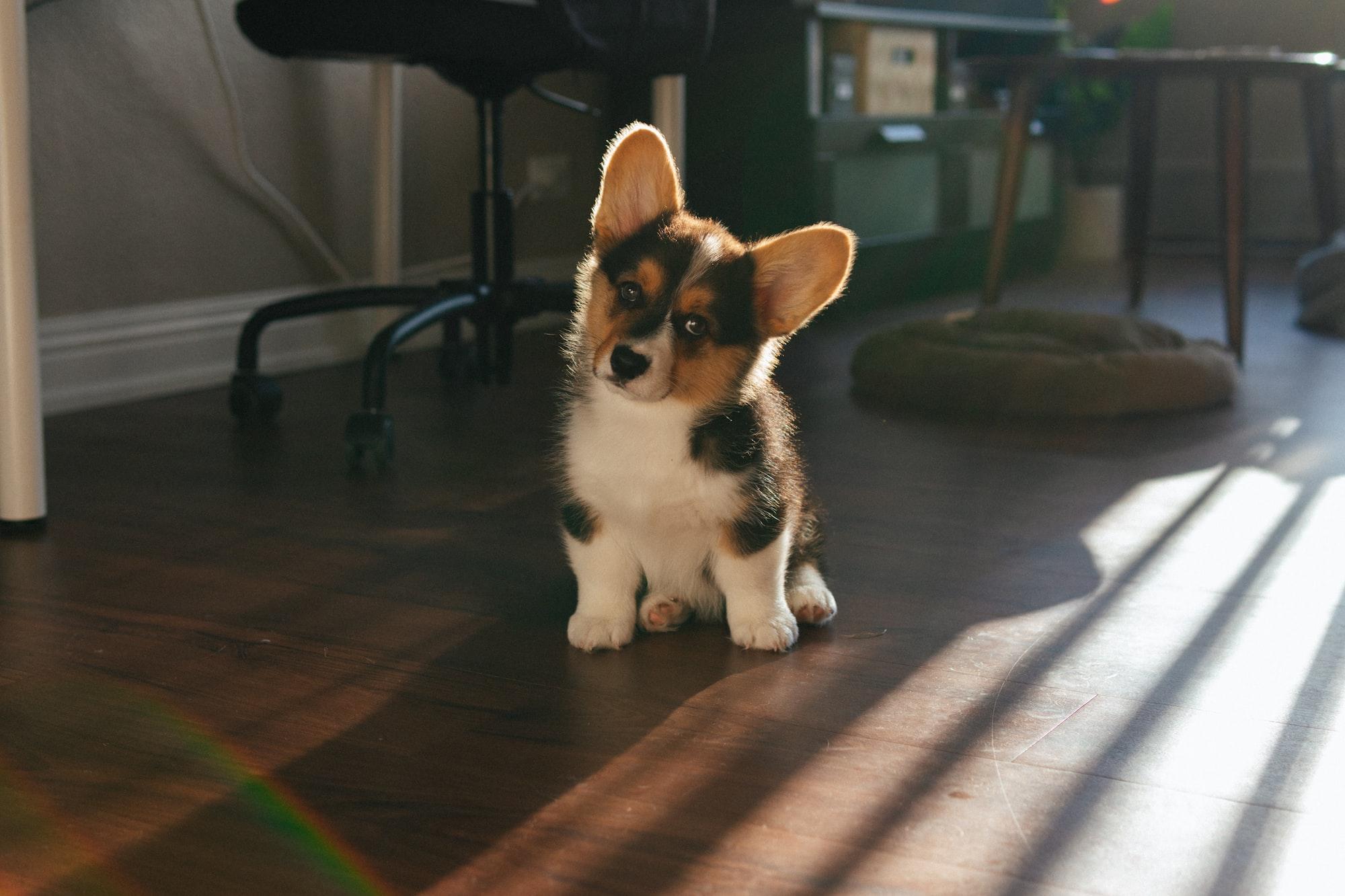 Morning Light + Puppy