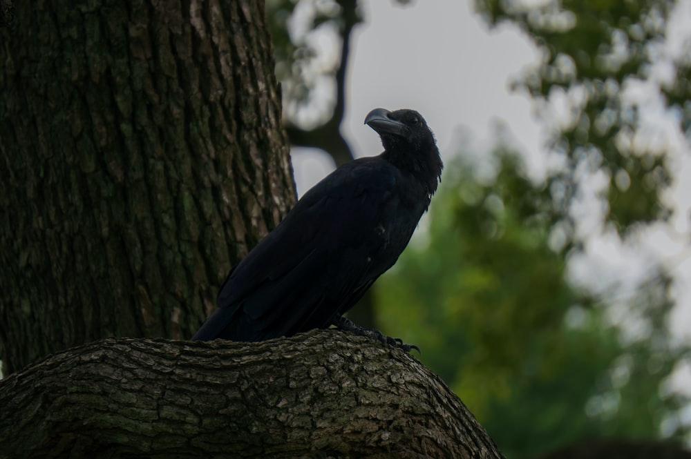 black bird on brown tree trunk during daytime