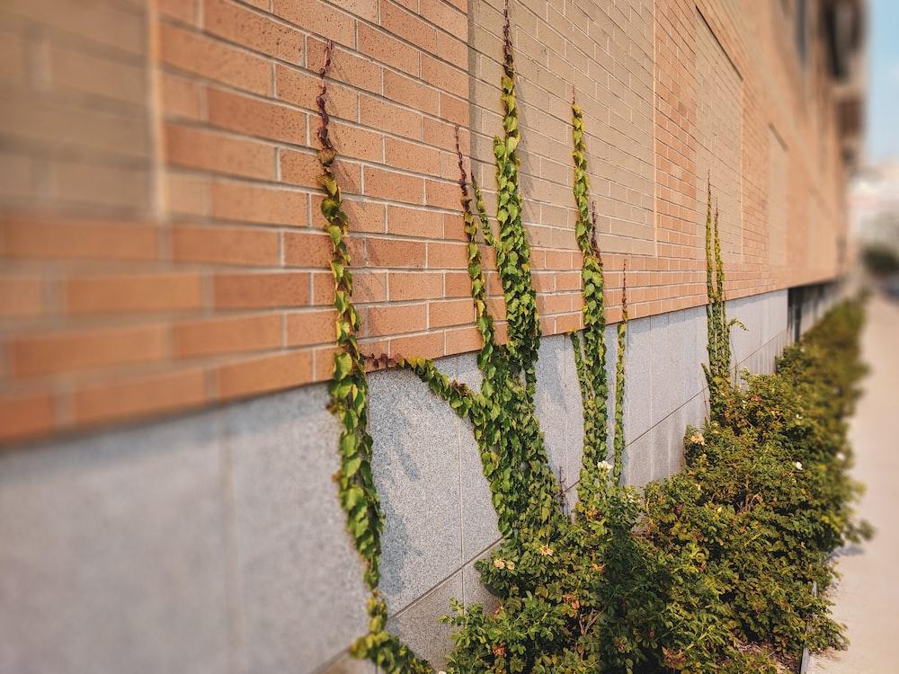 green plant near brown brick wall