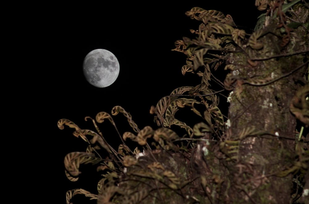 brown and green leaves during full moon