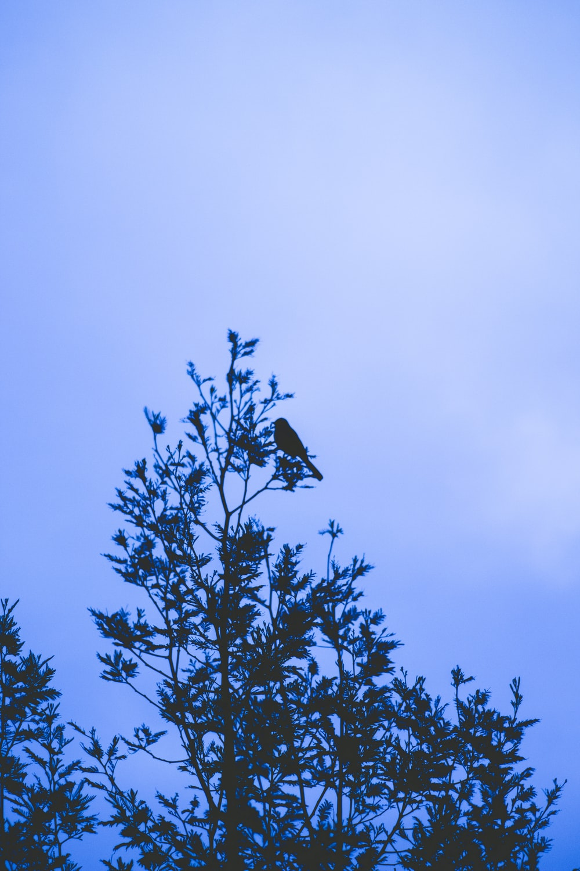 black bird on green tree during daytime