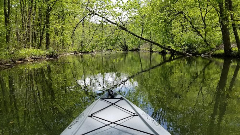 white kayak on lake near green trees during daytime