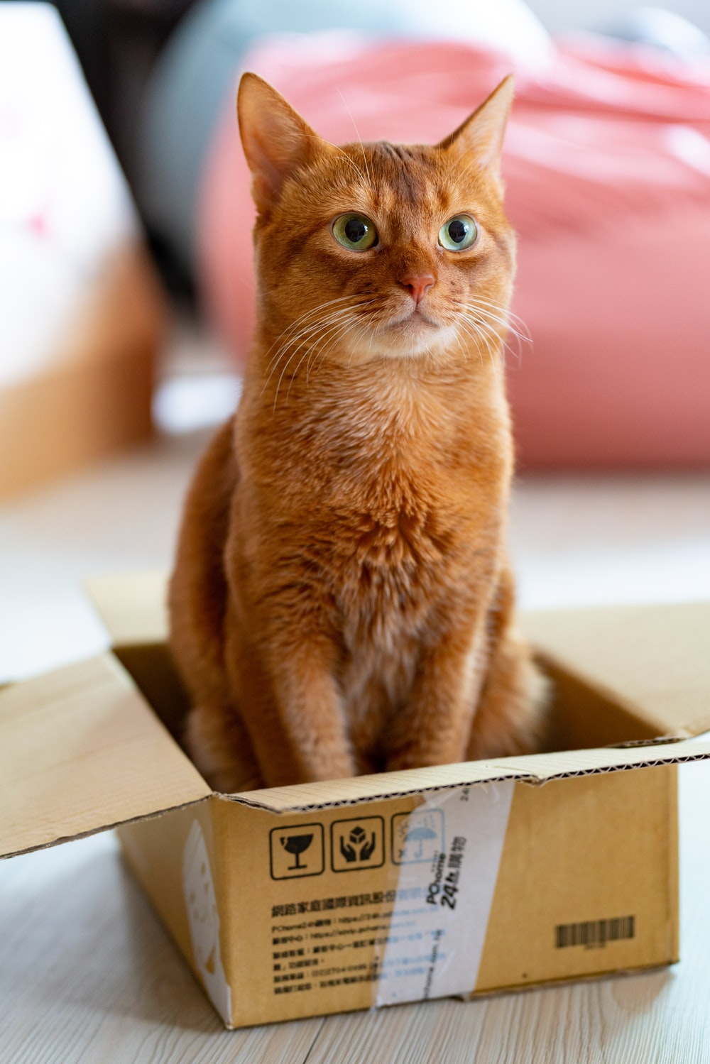 orange tabby cat in brown cardboard box