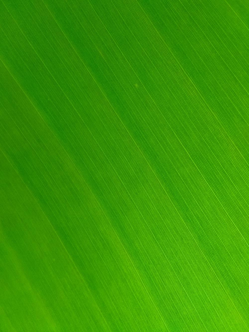 Leaf Texture Pictures Download Free Images On Unsplash
