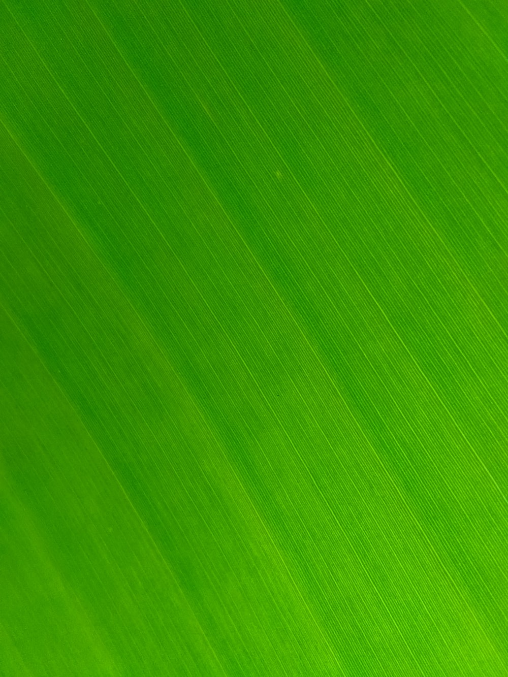 green and white striped textile