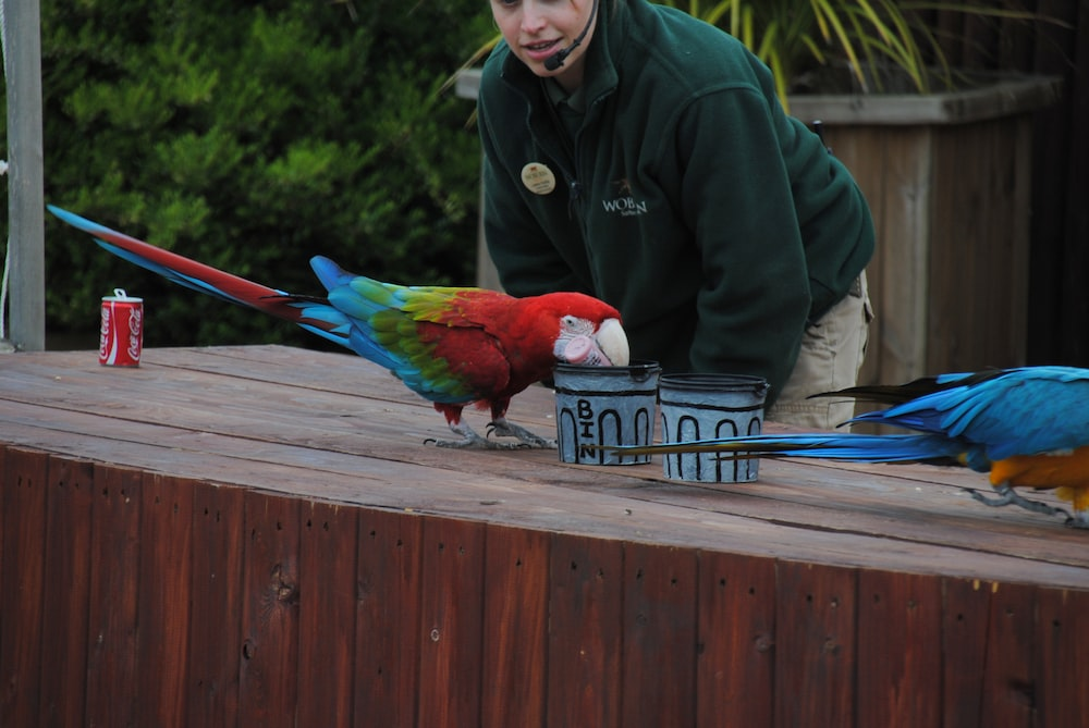 man in green jacket holding blue and red parrot