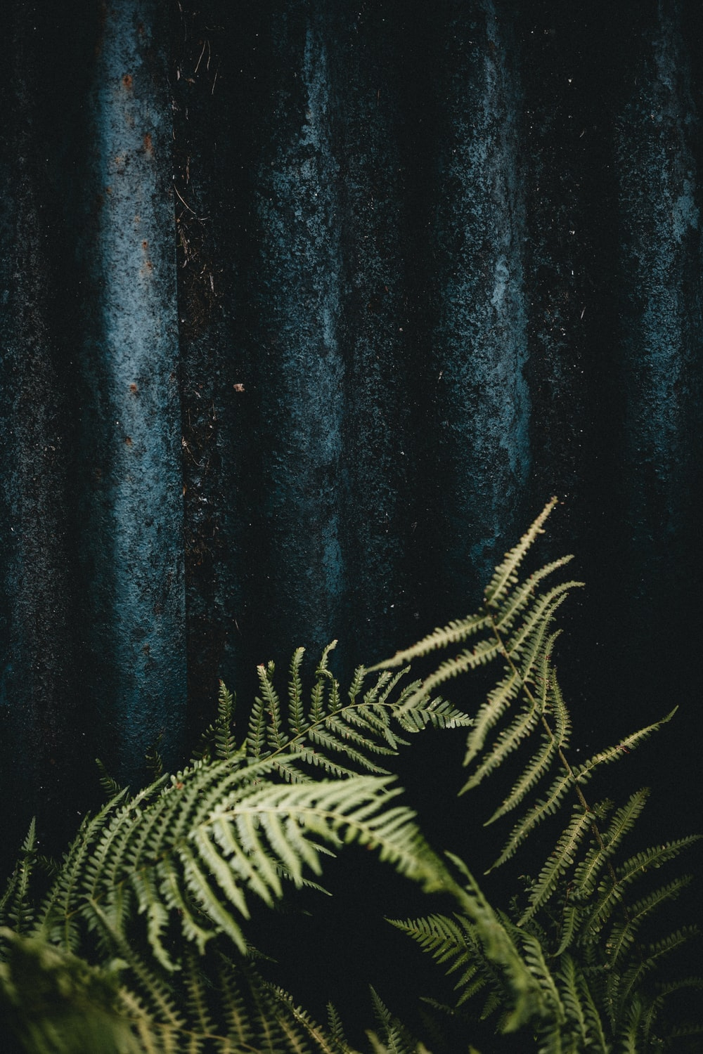 green and black plant painting