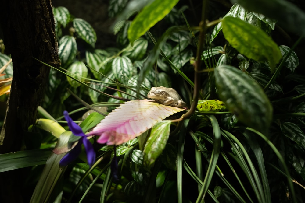 brown and black frog on pink lotus flower