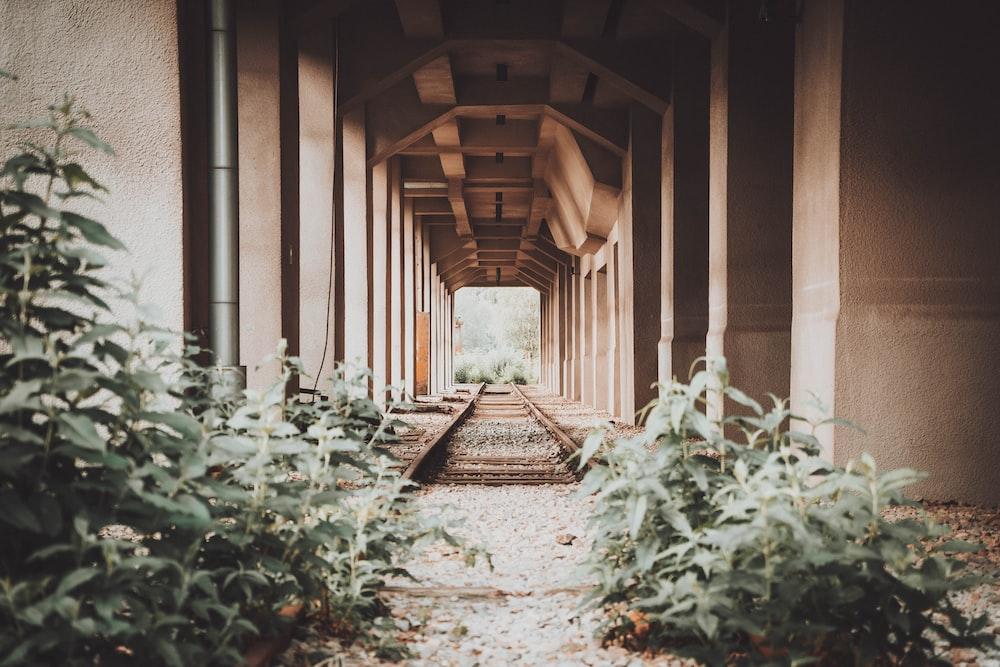 brown wooden pathway in between green plants