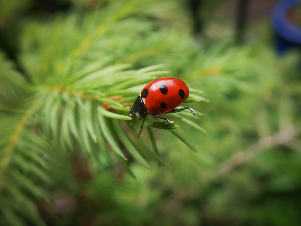 red ladybug on green leaf plant