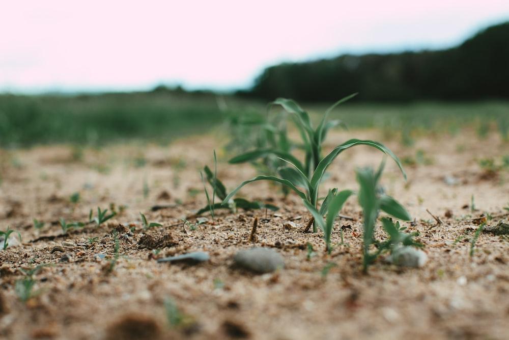 green grass on brown soil during daytime
