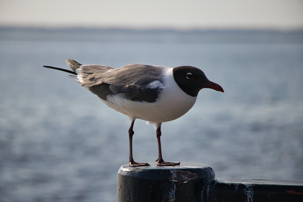 white and black bird on black metal fence during daytime