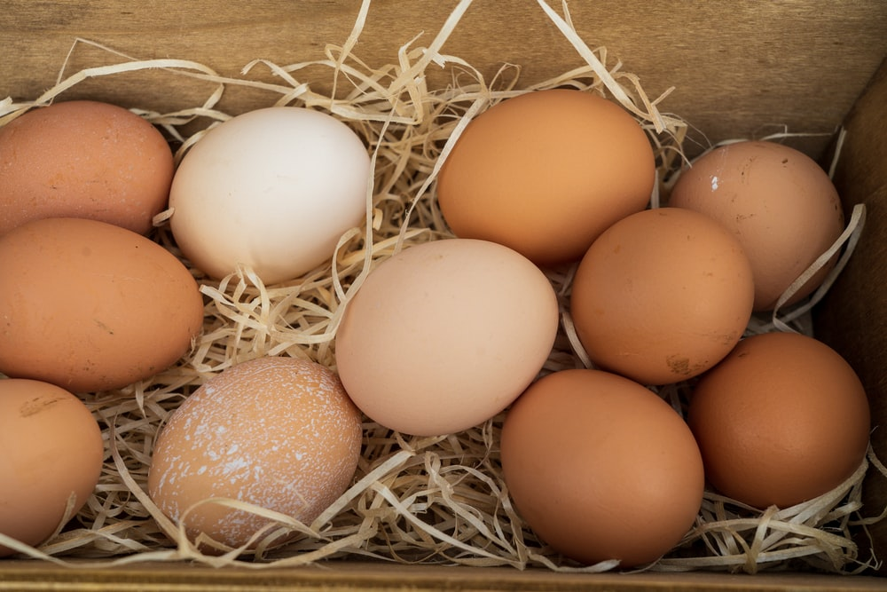 brown egg on brown nest