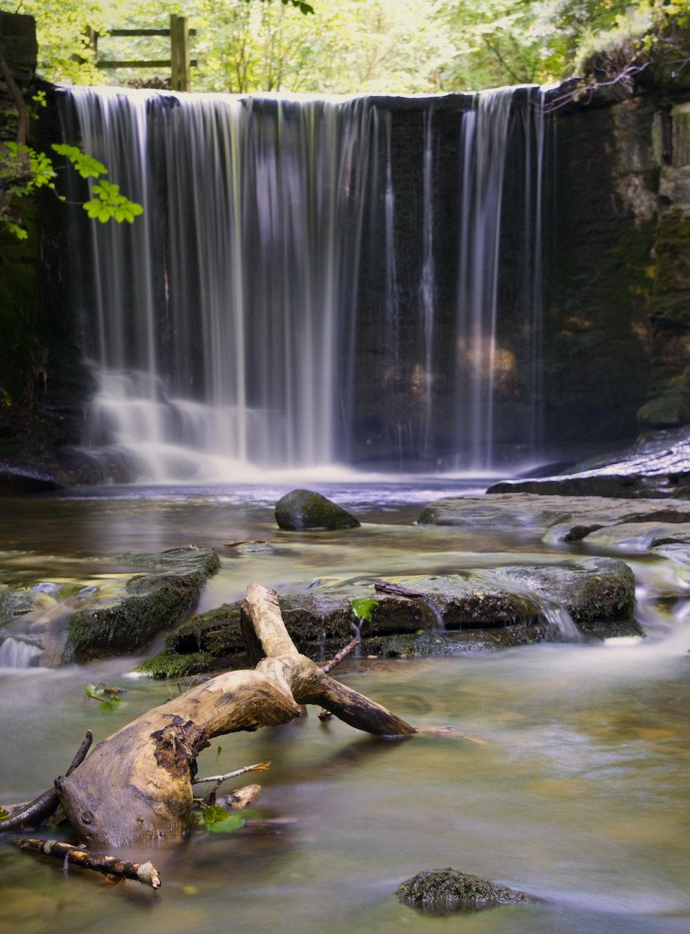 brown tree trunk on water falls