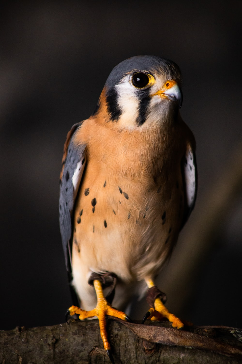 brown and white bird in close up photography