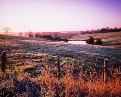 green grass field near body of water during daytime missouri zoom background