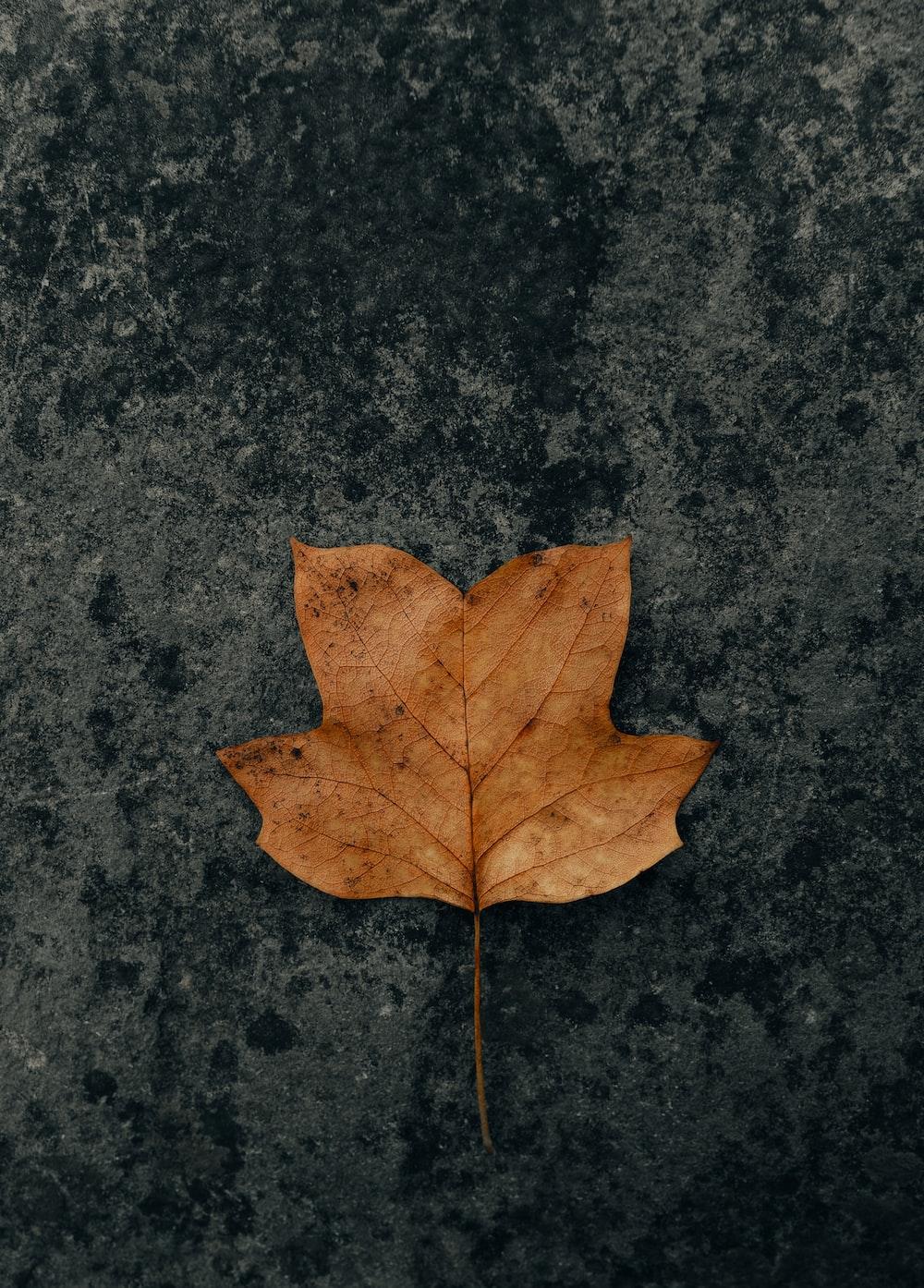 brown maple leaf on black marble table