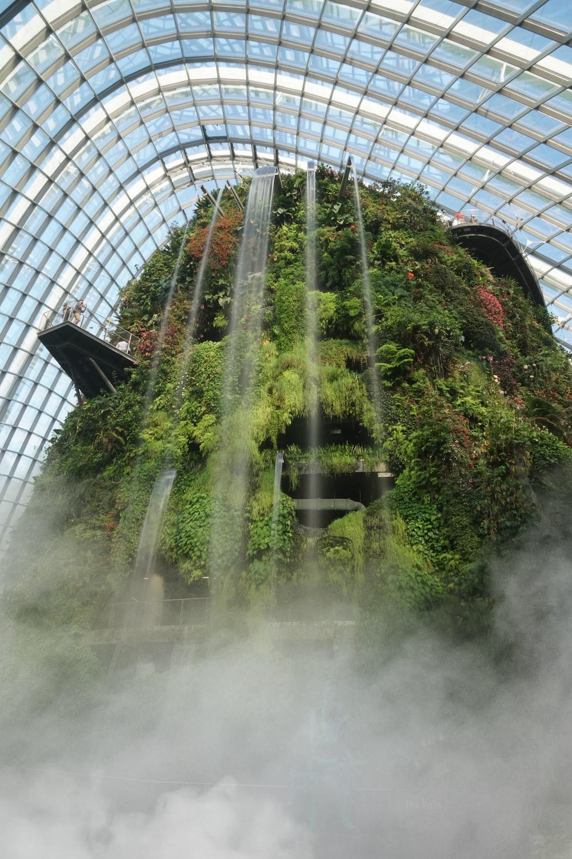 green plants inside a building