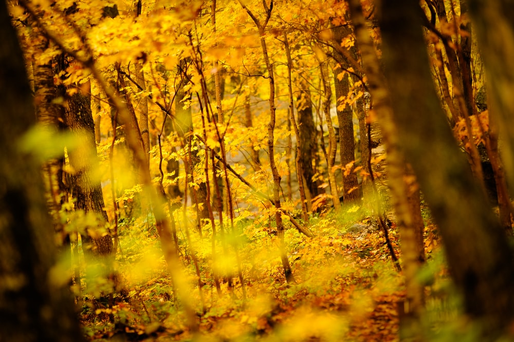 yellow leaf trees during daytime