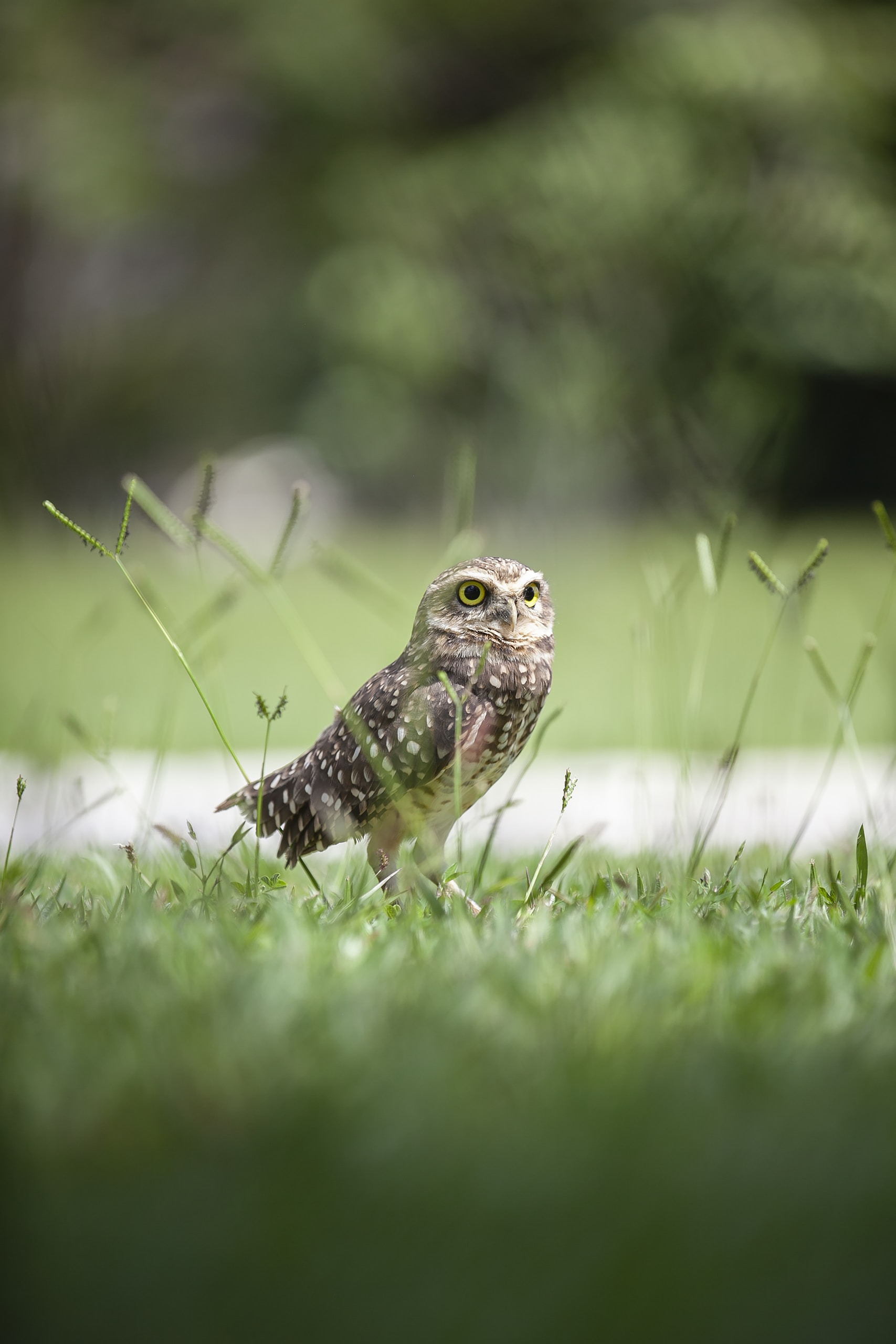 brown and white owl on green grass during daytime