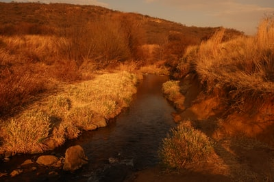 brown grass on river during daytime