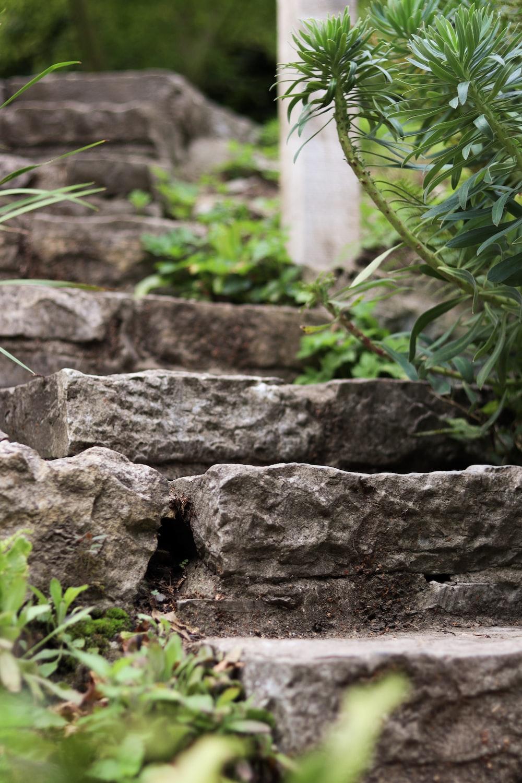 gray concrete blocks near green plants during daytime